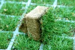 Выбираем газонную решетку